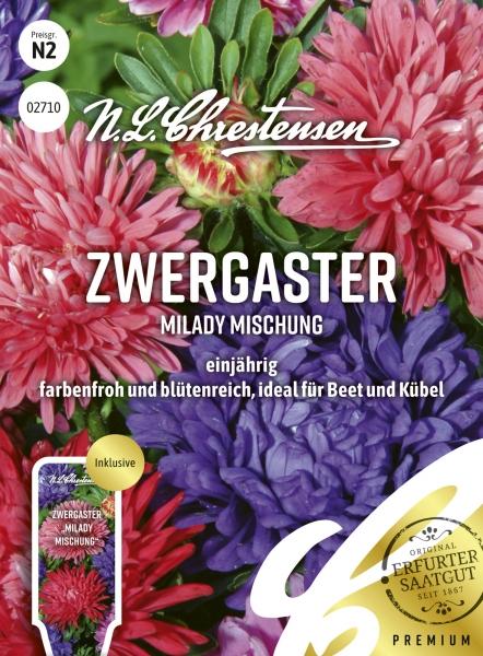 Zwergaster MiLady Mischung