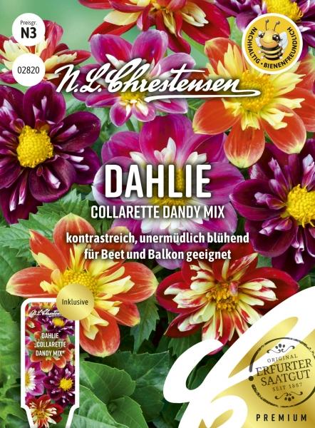 Dahlie Collarette Dandy Mix