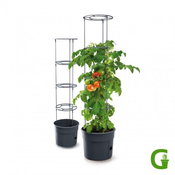 Up & Green Basic Tomatentopf mit Rankgitter und Wasserreservoir
