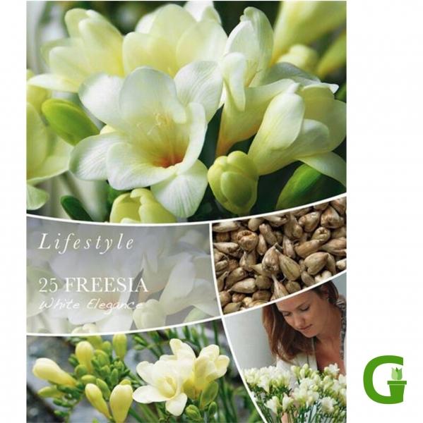 Lifestyle Freesie White Elegance - 25 St. Freesien, Größe 5/+
