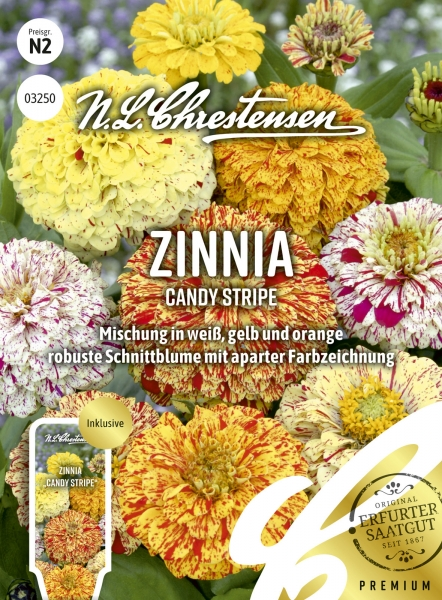 Zinnia Candy Stripe